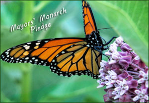 Monarch Migration with the Rockwall County Open Space Alliance @ Rockwall County Library