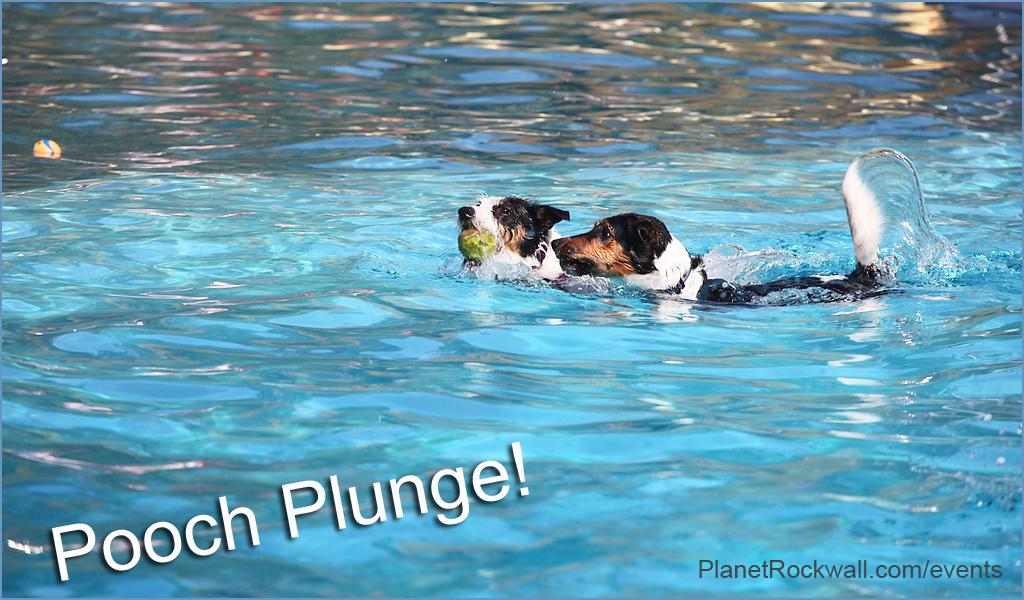 Pooch Plunge - Rowlett Wet Zone @ Wet Zone | Rowlett | Texas | United States