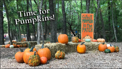 Rockwall Pumpkin Patch