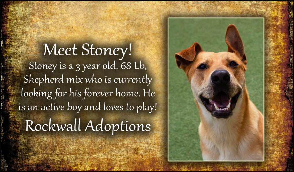 Rockwall Adoptions