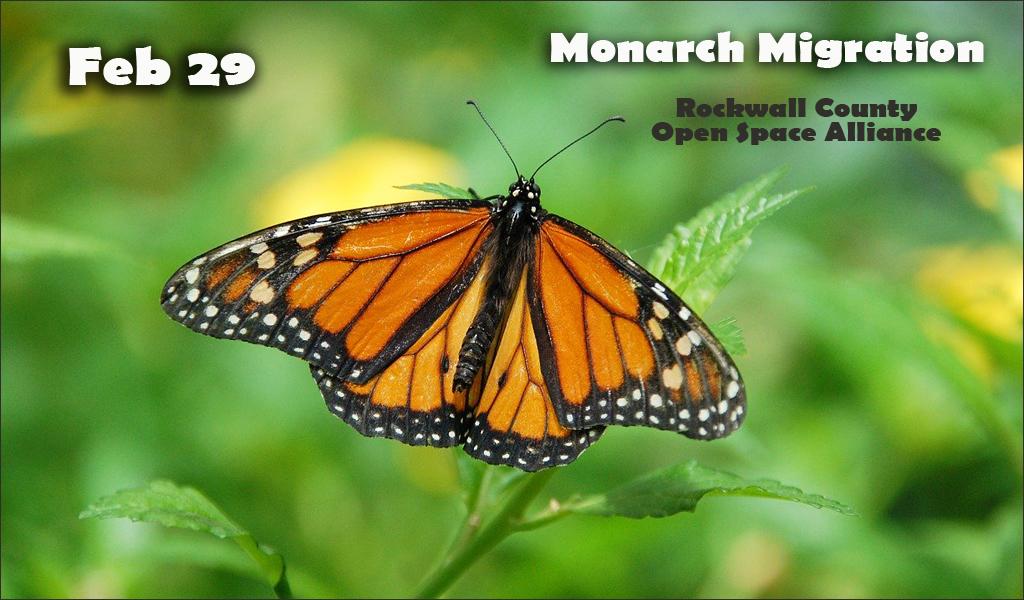 Monarchs | Rockwall County Open Space Alliance