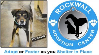 Rockwall Pet Adoptions COVID 19